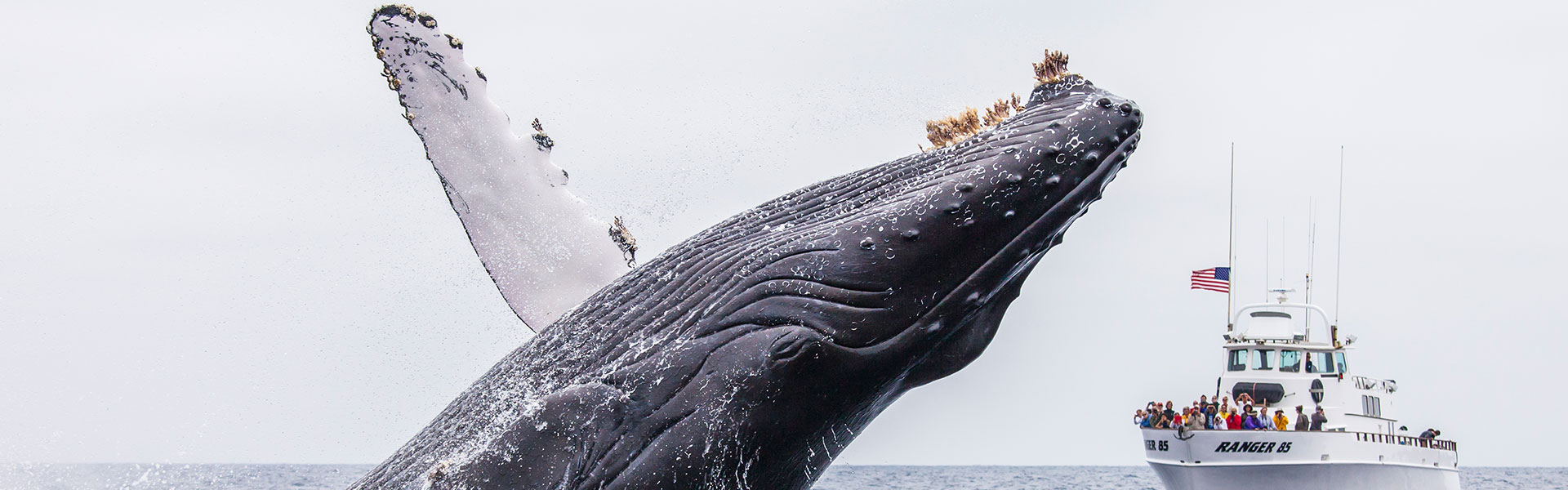 Channel-Islands-Whale-Watching_header