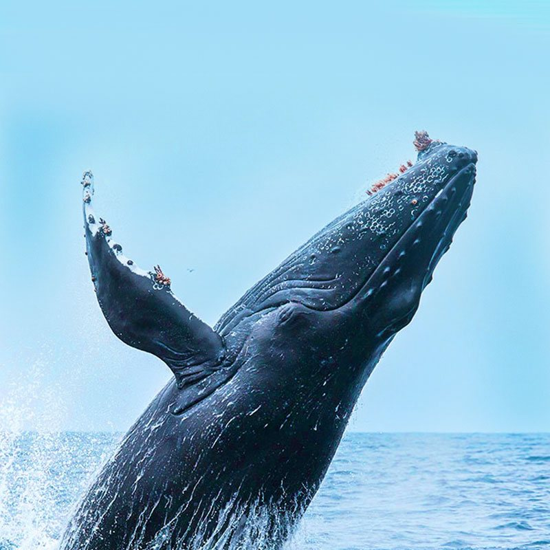 whale_watching2